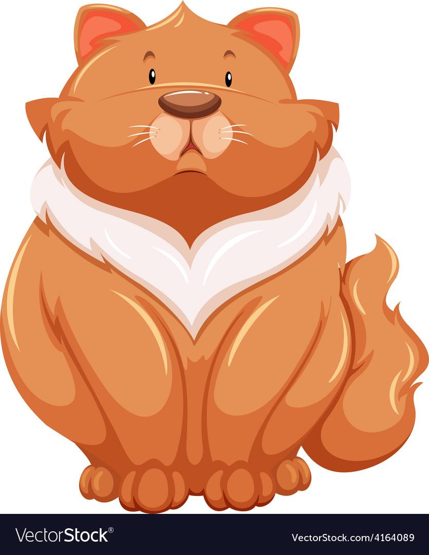 Fat cat vector   Price: 1 Credit (USD $1)