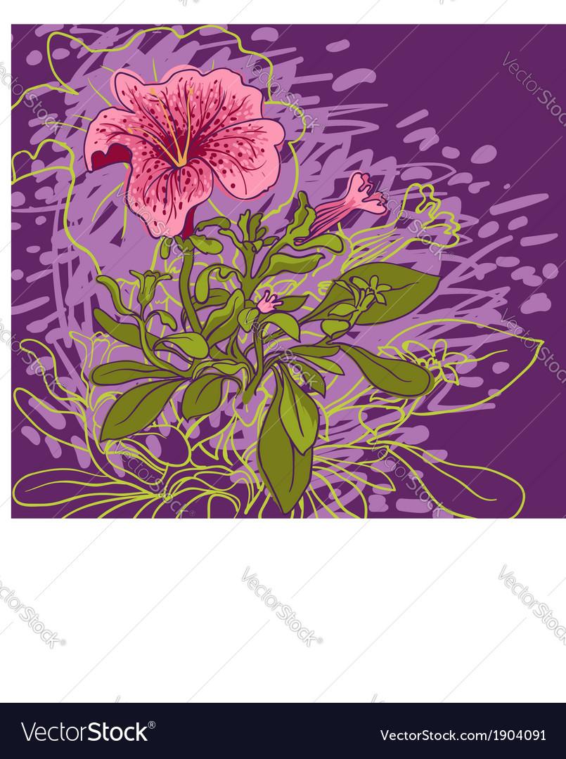 Pentunia flower vector