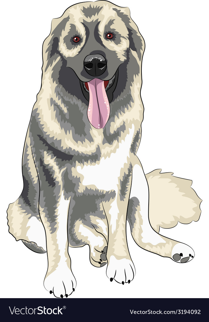 Caucasian shepherd dog vector | Price: 1 Credit (USD $1)