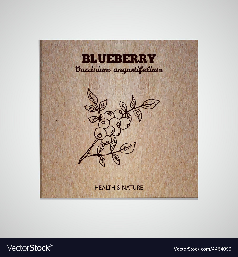 Herbs and spices collection - blueberry vector | Price: 1 Credit (USD $1)