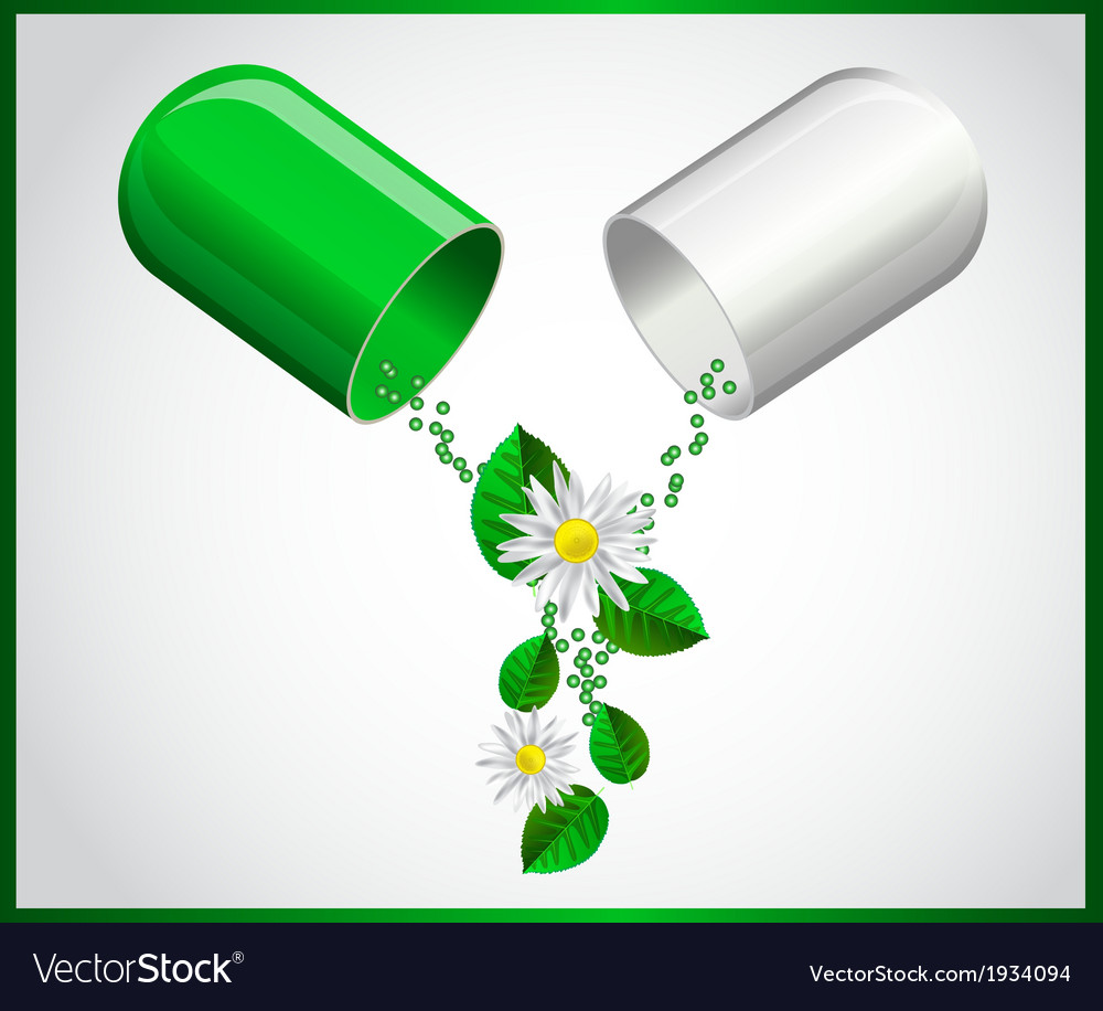 Open capsule leaves and chamomile flowers vector | Price: 1 Credit (USD $1)