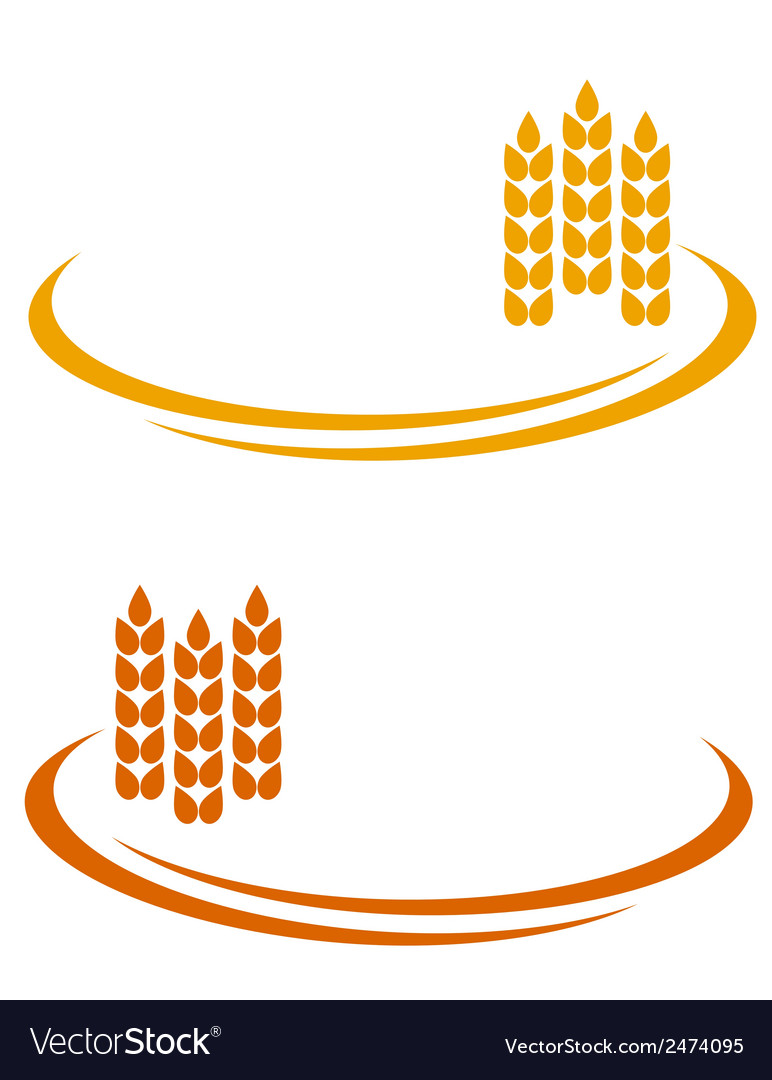 Wheat ears with decorative line vector | Price: 1 Credit (USD $1)
