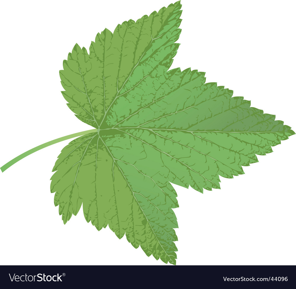 Currant leaf vector | Price: 1 Credit (USD $1)