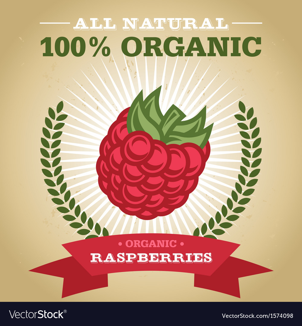 Organic raspberry vector | Price: 1 Credit (USD $1)