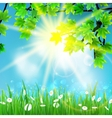 Summer background with sky and grass vector