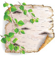 Birch bark and leaves vector