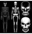 Set of skeletons and skulls vector