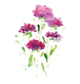 Pink aster flower on a white background vector
