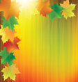Colorful background with the autumn maple leaves vector