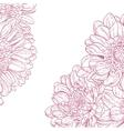 Line drawings pink chrysanthemum vector