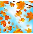 Autumn tree maple leaves against the blue eps 8 vector