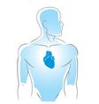 Internal organs heart vector