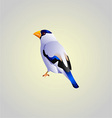 White bird vector