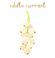 White currant berry vector