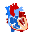 Function and definition human heart vector