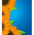 Sunflowers and leaves card vector