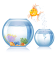 Aquarium and fish vector
