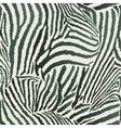 Animal zebra seamless background vector
