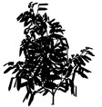 Exotic tree silhouette vector