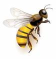 3d bee stock icon bee logo vector