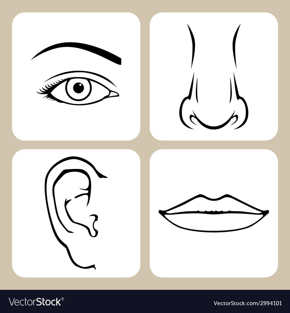 Face organs vector | Price: 1 Credit (USD $1)