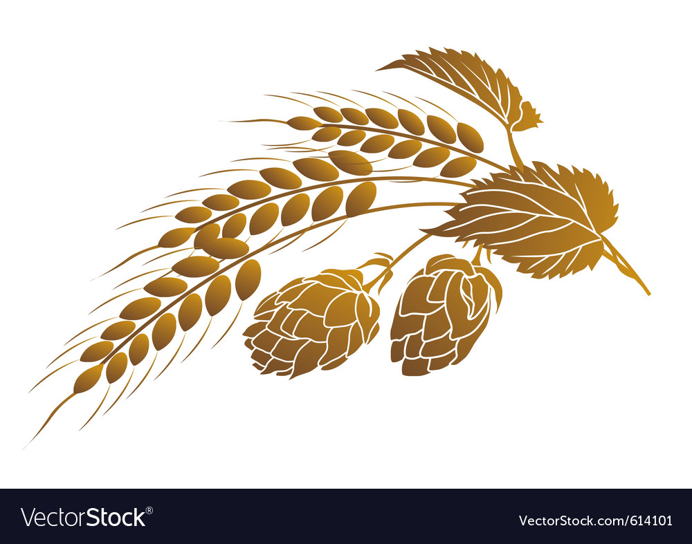 Hops and wheat vector | Price: 1 Credit (USD $1)