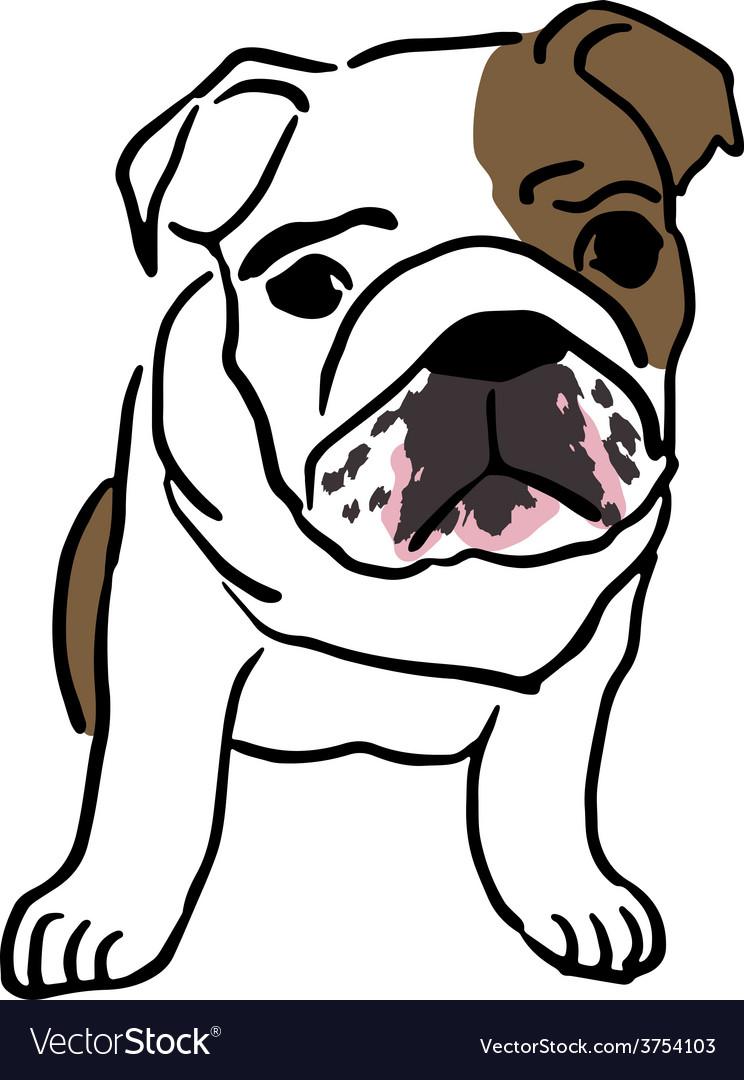 Pup of english bulldog vector | Price: 1 Credit (USD $1)