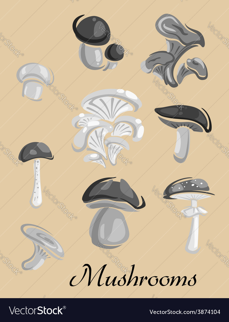 Edible and toxic forest mushrooms placard vector | Price: 1 Credit (USD $1)