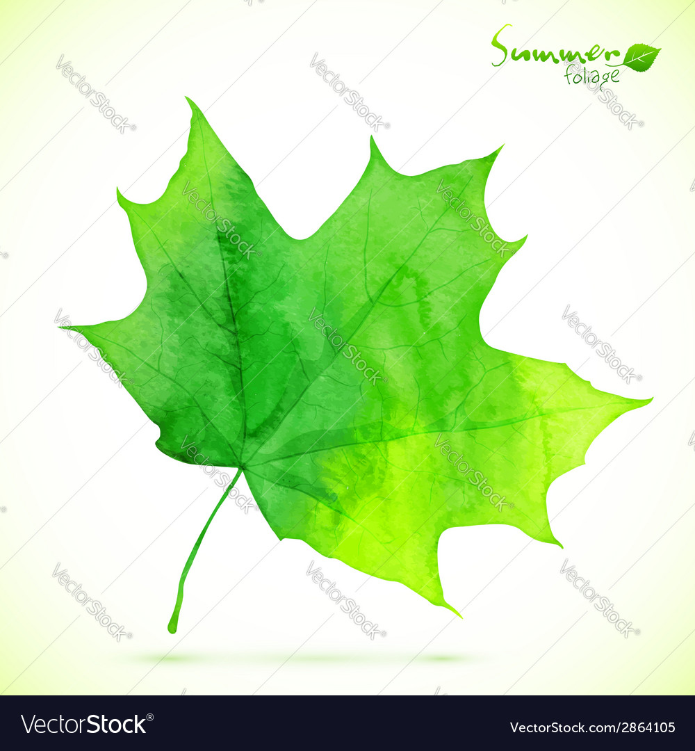 Watercolor green maple leaf vector | Price: 1 Credit (USD $1)