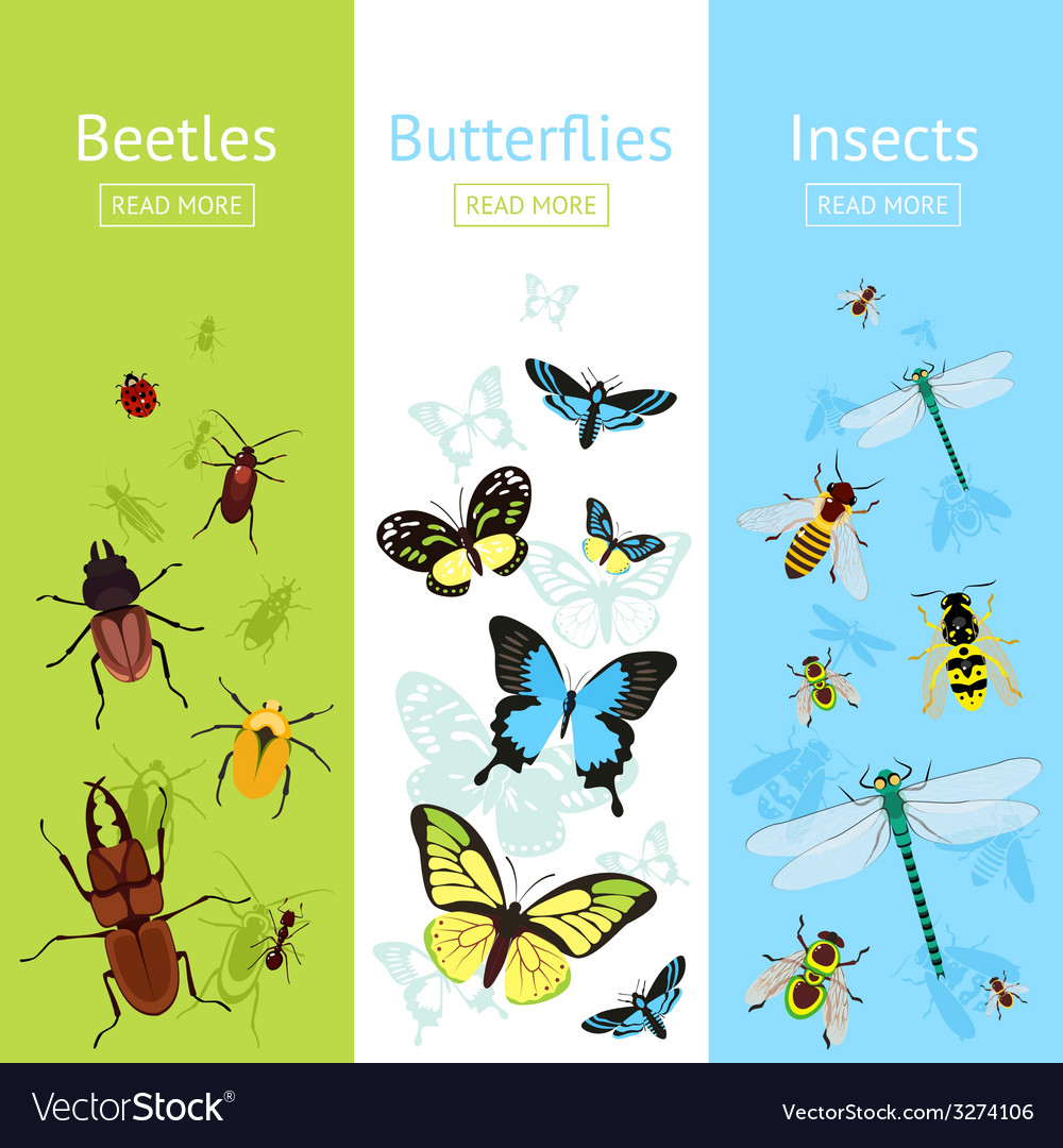 Insects banner set vector | Price: 1 Credit (USD $1)