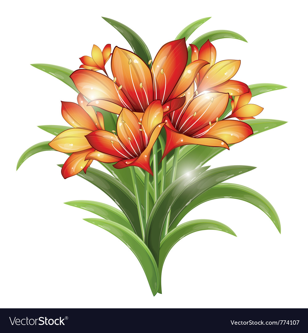 Bunch of orange lilies vector | Price: 3 Credit (USD $3)