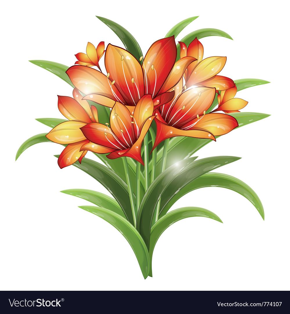 Bunch of orange lilies vector | Price: 3 Credit (USD $3)