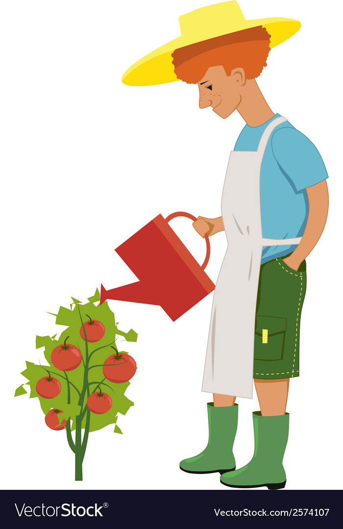 Watering tomatoes vector | Price: 1 Credit (USD $1)