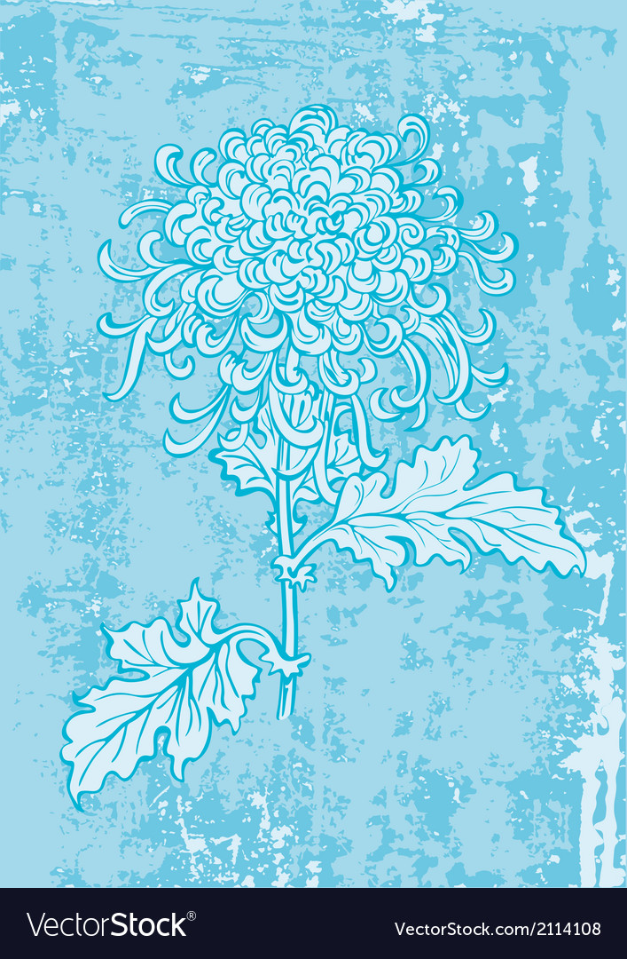 Chrysanthemum vector | Price: 1 Credit (USD $1)