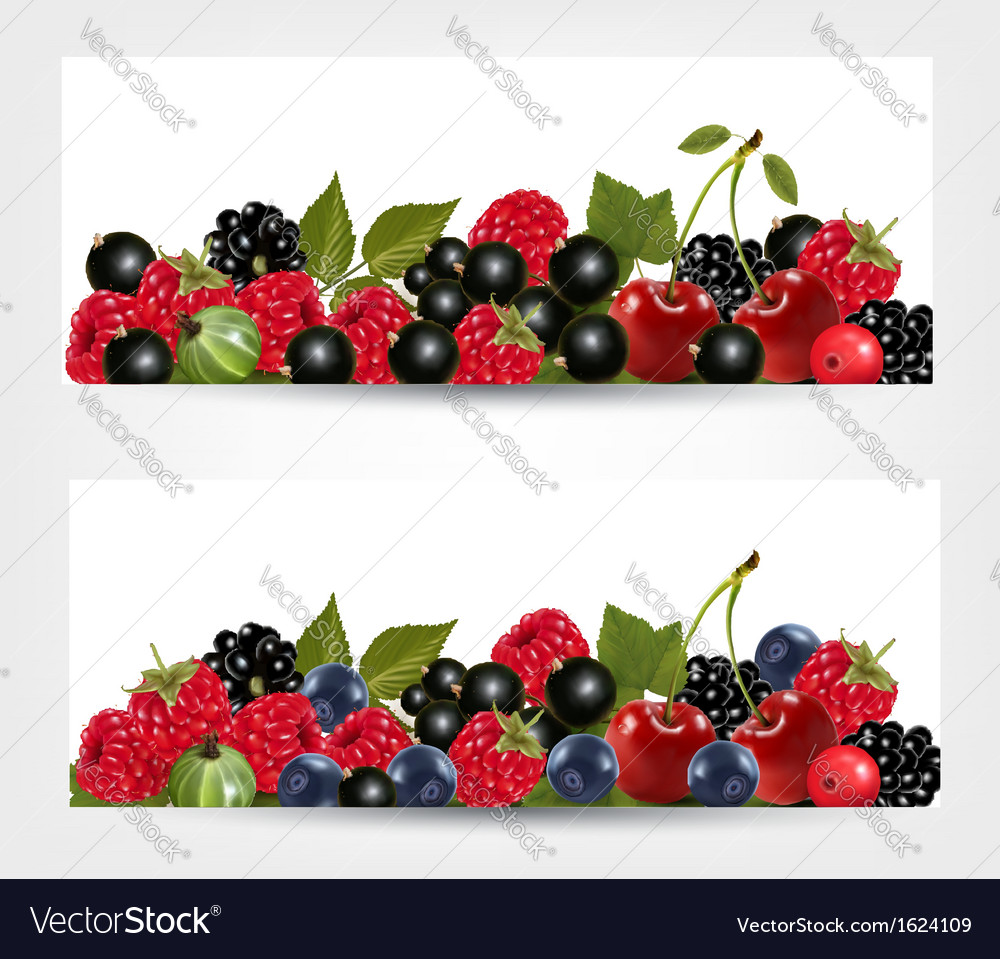 Two banners with delicious ripe berries vector | Price: 1 Credit (USD $1)