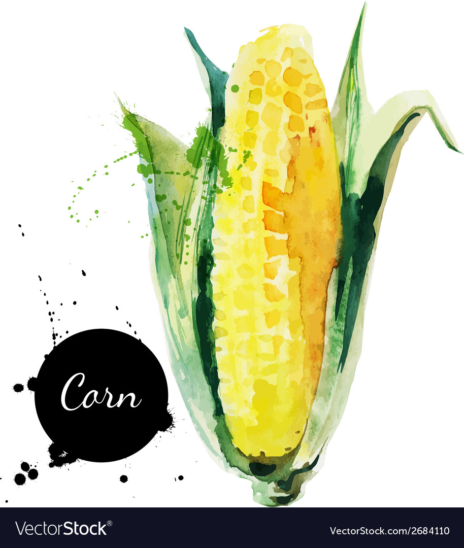 Corncob with leaf hand drawn watercolor painting vector | Price: 1 Credit (USD $1)