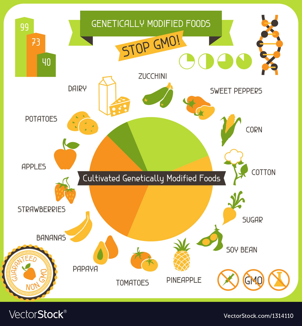 Information poster genetically modified foods vector | Price: 3 Credit (USD $3)