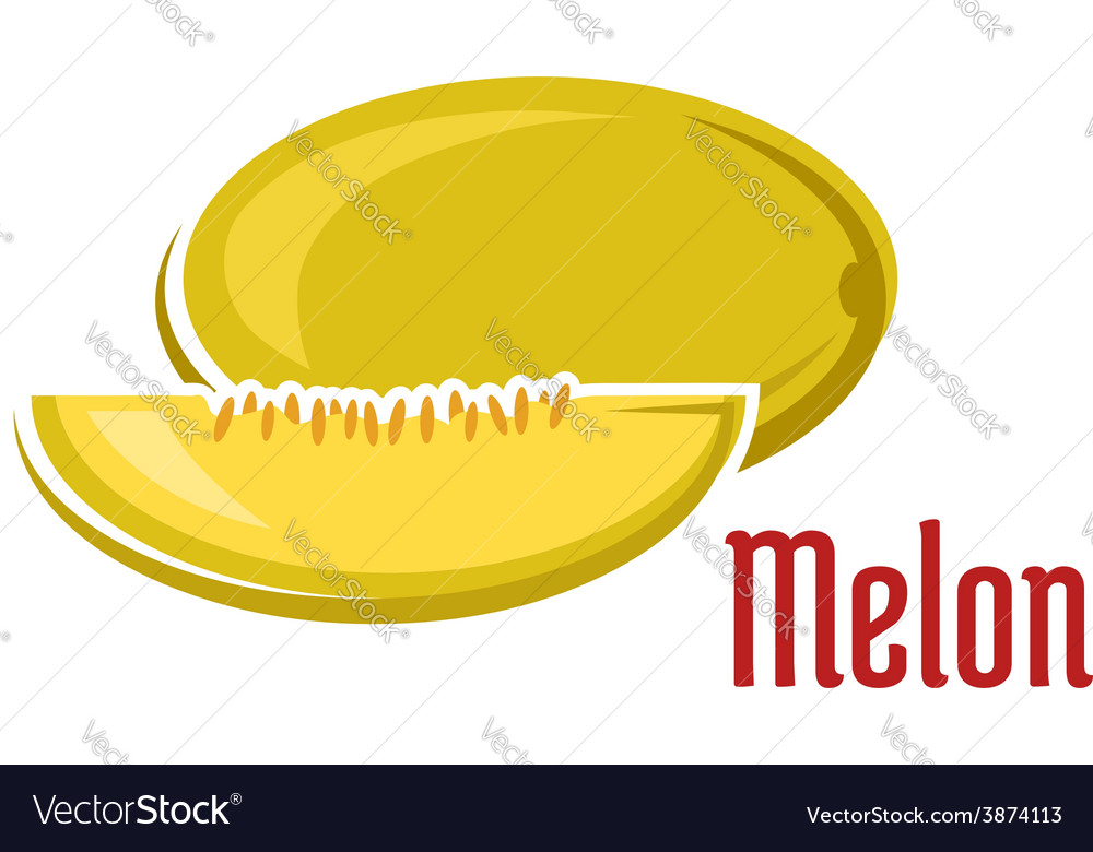 Ripe aroma melon fruit with slice vector | Price: 1 Credit (USD $1)