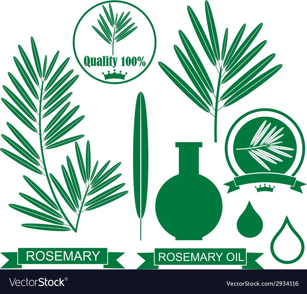 Rosemary vector | Price: 1 Credit (USD $1)