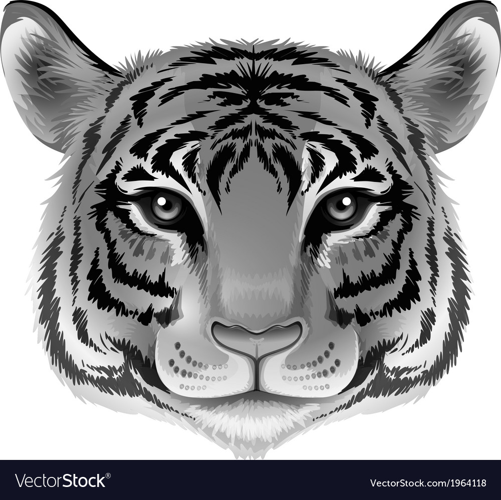 Tigerhead grey vector | Price: 1 Credit (USD $1)
