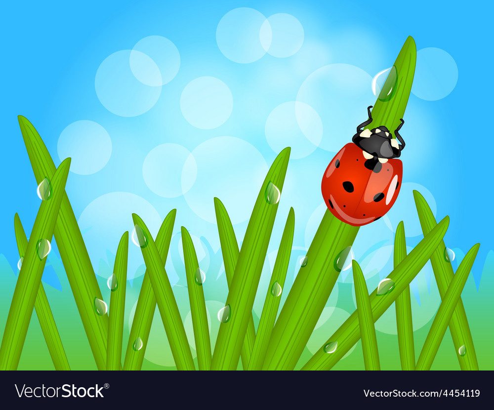 Ladybug on wet grass vector | Price: 1 Credit (USD $1)