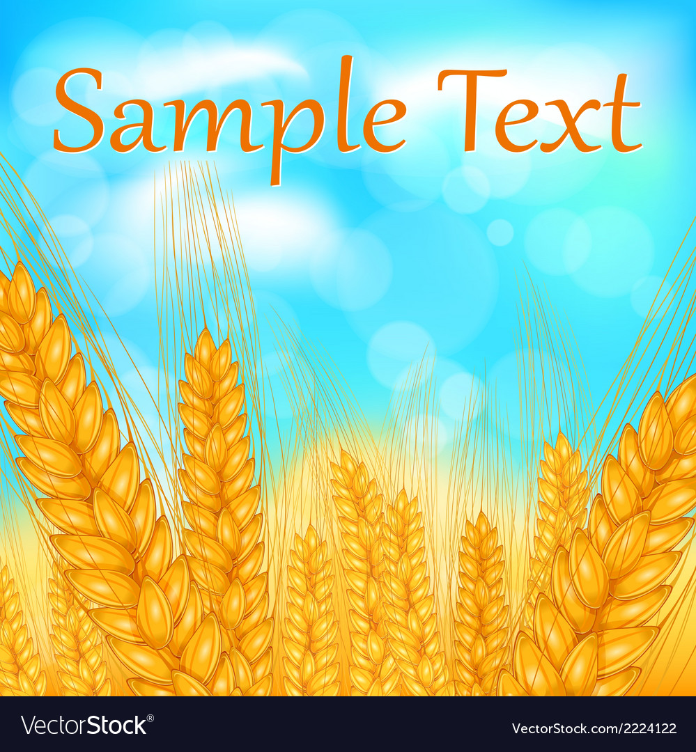 Ears of wheat field vector | Price: 1 Credit (USD $1)