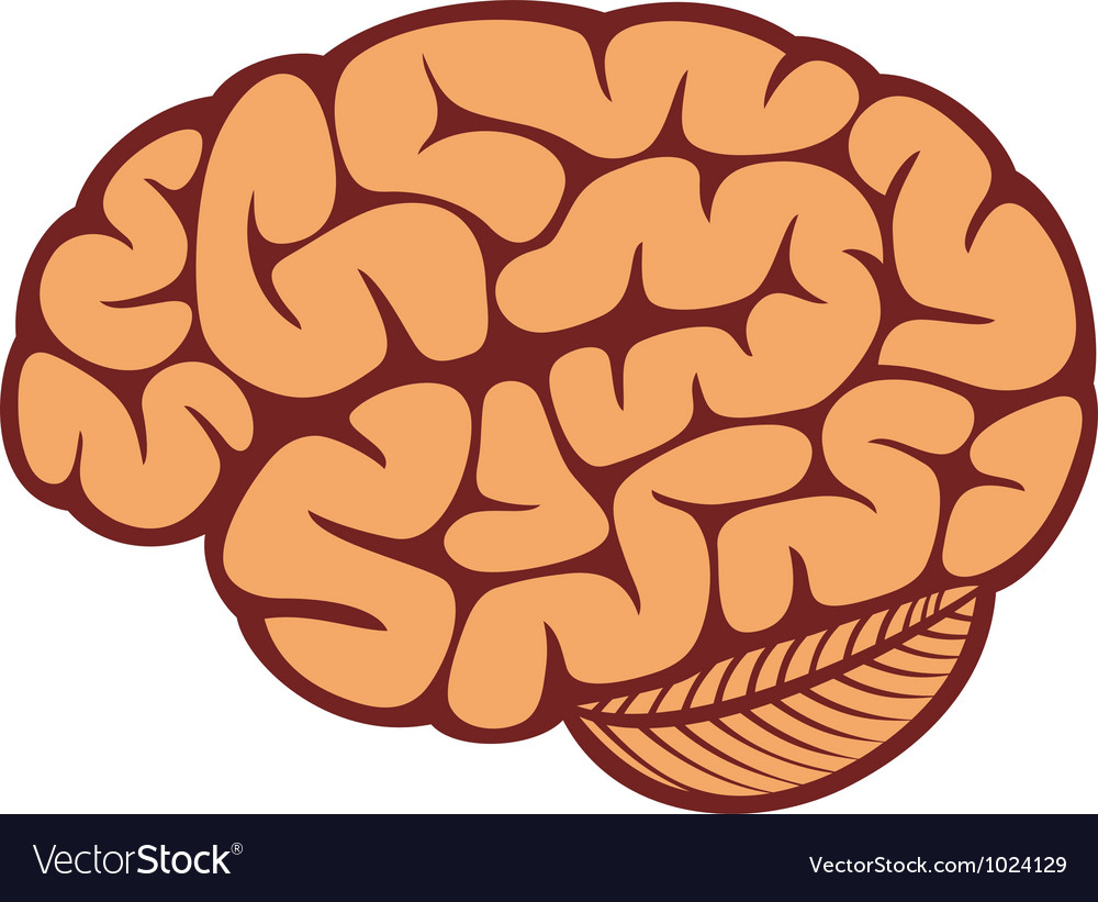 The human brain vector | Price: 1 Credit (USD $1)