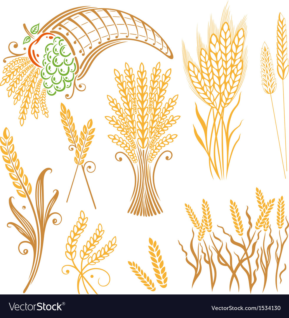 Design elements corn grain vector | Price: 1 Credit (USD $1)