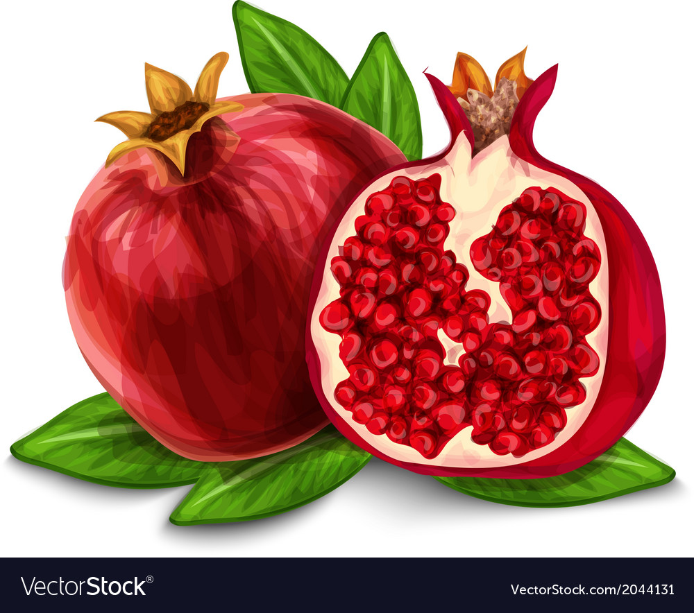 Pomegranate isolated poster or emblem vector | Price: 1 Credit (USD $1)