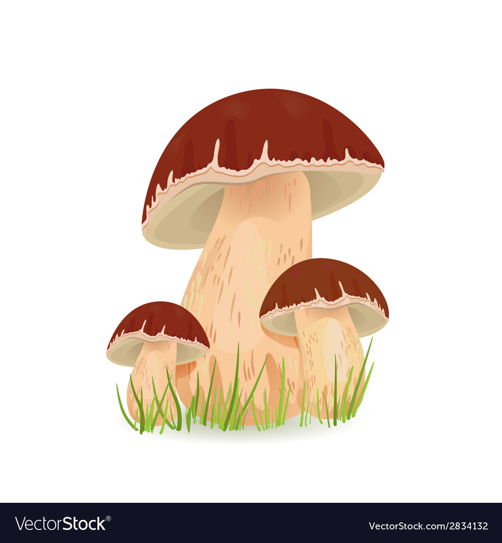 Edible mushroom porcini for you design vector | Price: 1 Credit (USD $1)