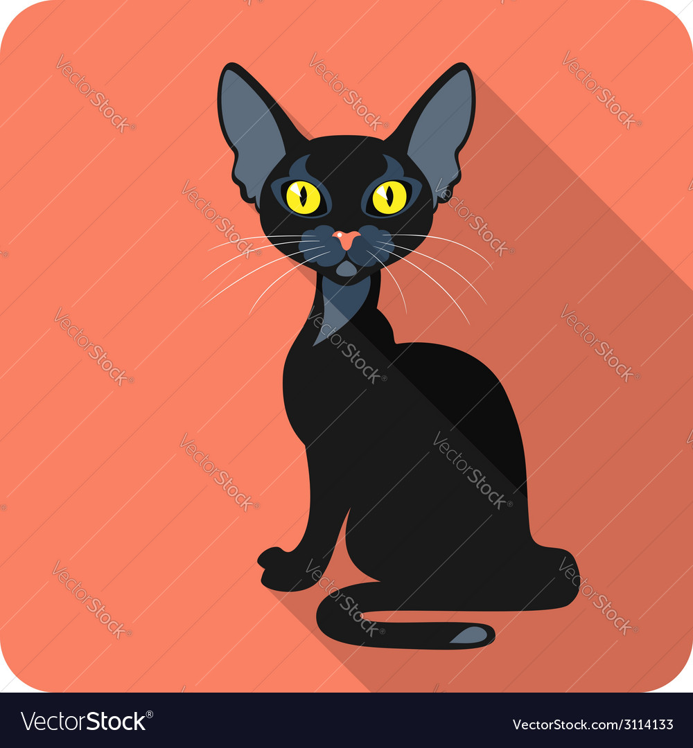 Bombay black cat icon flat design vector | Price: 1 Credit (USD $1)