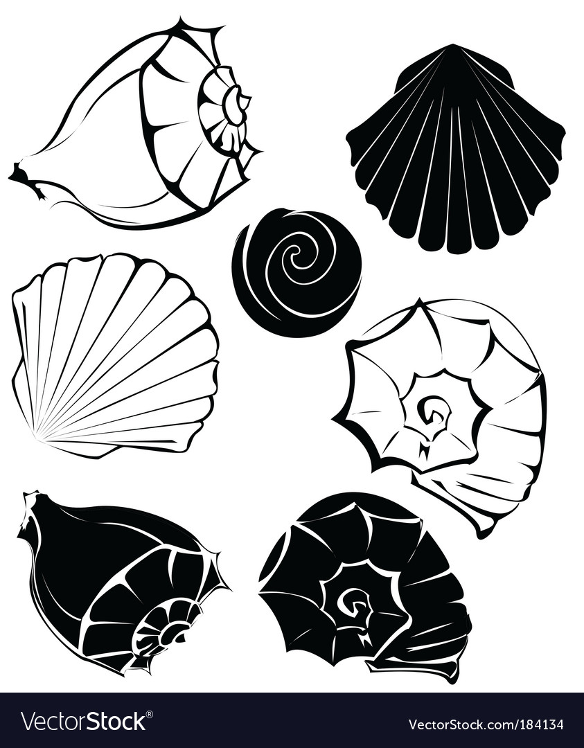 Silhouette of sea shells vector | Price: 1 Credit (USD $1)