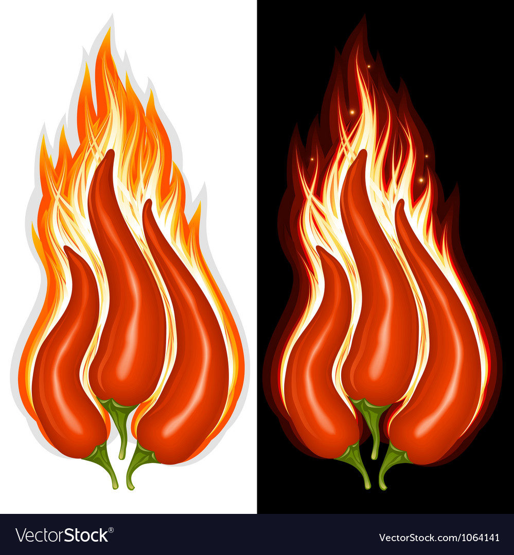 Hot chili pepper vector | Price: 1 Credit (USD $1)