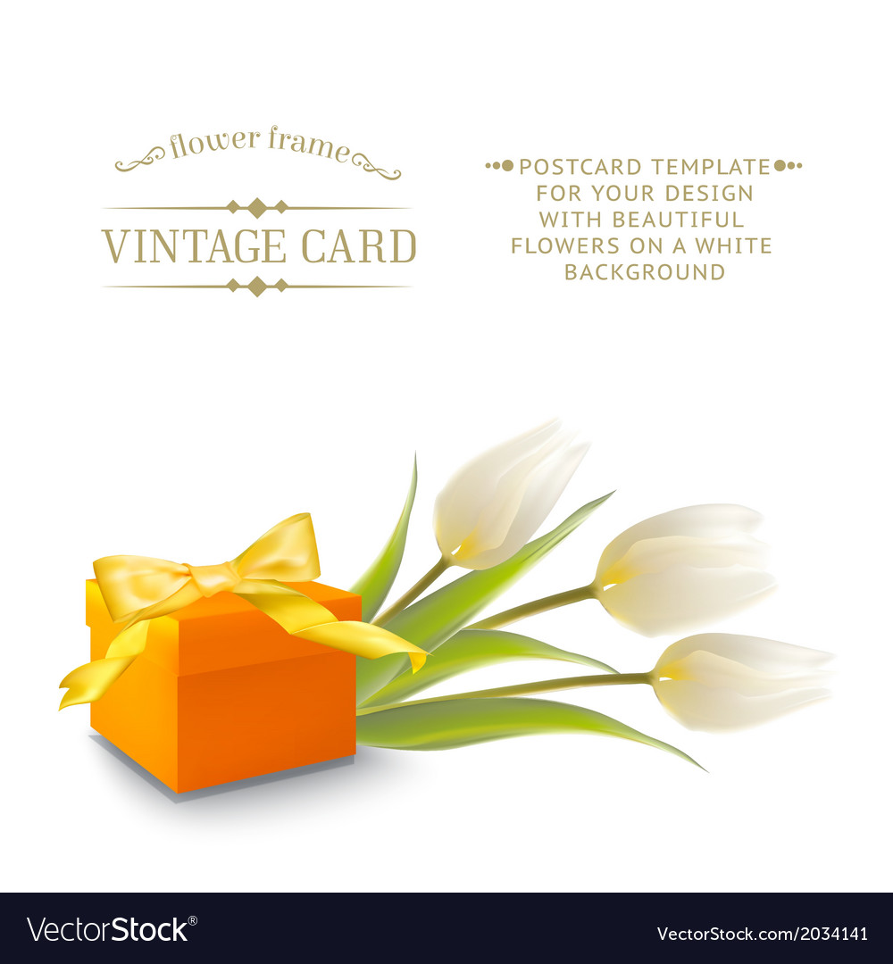 Tulips and gift box vector | Price: 1 Credit (USD $1)